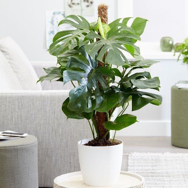 content_plants_-5073180