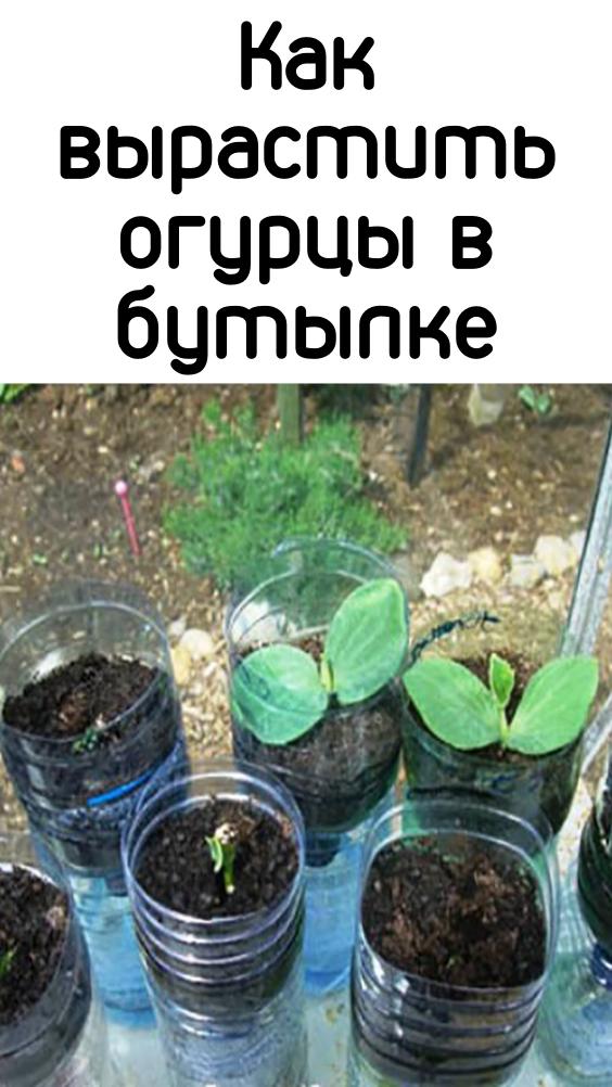 sovetrecept-6-1-9333877